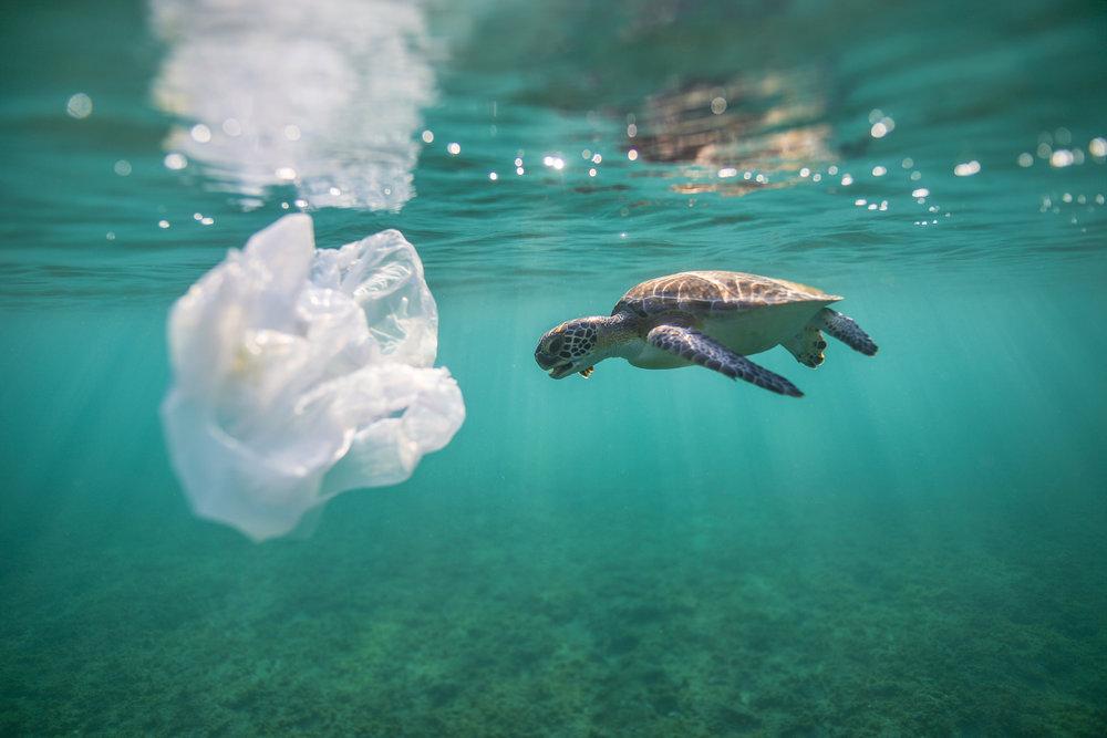 Sea turtles plastic save the sea turtles with PI